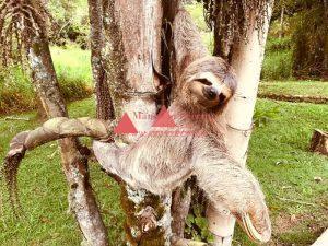 Condomínio Aruã - Bicho-Preguiça