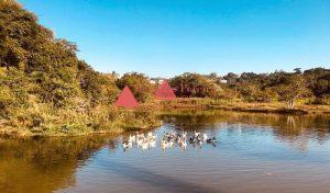 Condomínio Aruã - Patos Nadando